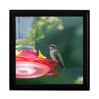 Gehockter Kolibri Geschenkbox
