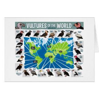 Geier der Weltkarte Grußkarte