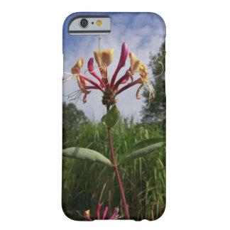 Geissblatt Blüte und Wolken Barely There iPhone 6 Hülle