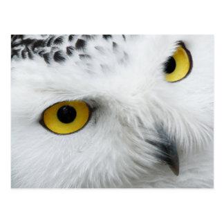Gelb-mit Augen Snowy-Eule Postkarte