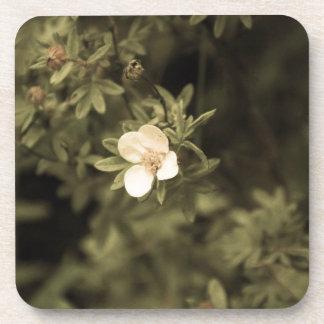 gelbe Blume aged1 Untersetzer