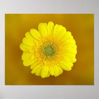 gelbe Blume Poster
