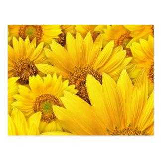 Gelbe Blume Postkarte