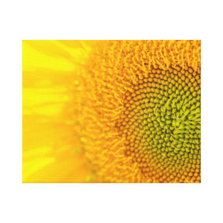 Gelbe Blumensonnenblume Leinwanddruck
