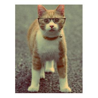 Gelbe Katze schaukelt die Gläser Postkarten