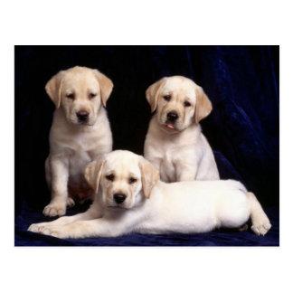 Gelbe Labrador retriever-Hündchen-Postkarte Postkarten
