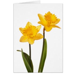 Gelbe Narzissen auf Weiß - Narzissen-Blumen-freier Karte