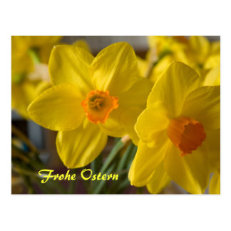 Gelbe Narzissen Frohe Ostern Postkarte