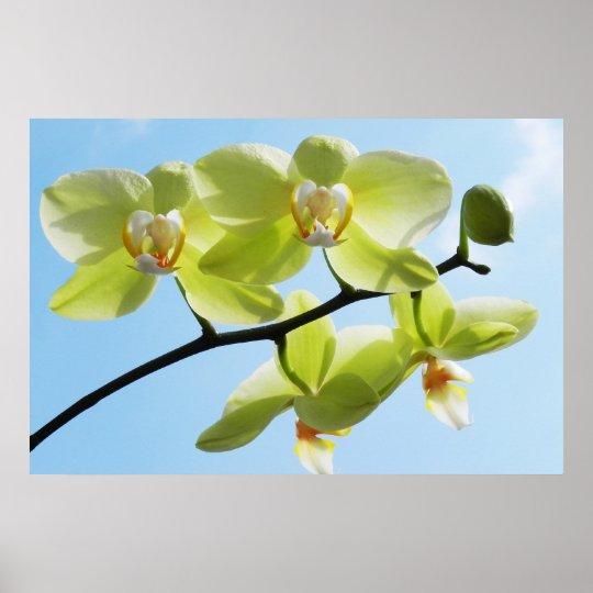 Gelbe Orchidee - Druck Poster