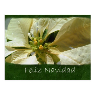 Gelbe Poinsettias 1 - Feliz Navidad Postkarte
