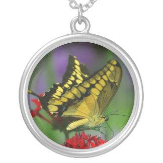 gelbe Schmetterlingshalskette Versilberte Kette