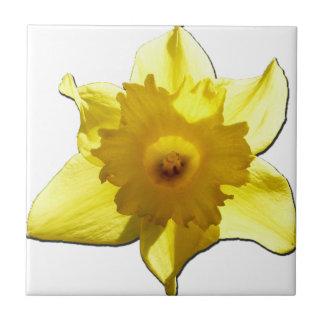 Gelbe Trompete-Narzisse 1,0 Kleine Quadratische Fliese