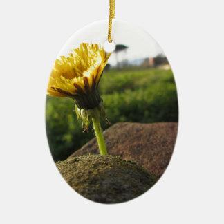Gelbe Wildblume, die auf Steinen am Ovales Keramik Ornament