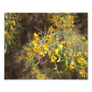 Gelber Blumen-Foto-Druck Fotos