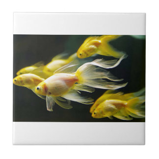 Gelber extravaganter AquariumGoldfish Kleine Quadratische Fliese