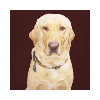 Gelber Labrador Leinwanddruck