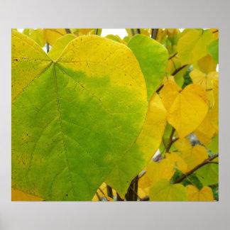 Gelber und grüner Redbud verlässt Herbst-Natur Poster