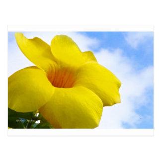 Gelbes Flower.jpg Postkarte