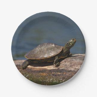 Gemalte Schildkröte auf einem Klotz Pappteller