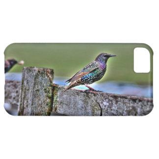 Gemeiner Starling auf einem Zaun nahe Stonehenge iPhone 5C Hülle