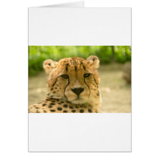 Gepard Karte