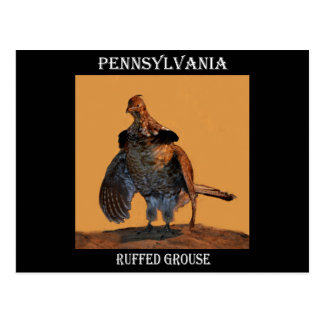 Getrumpftes Waldhuhn (Pennsylvania) Postkarte