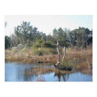 Gezeiten- Sumpfgebiet Buxton NC OBX Postkarte