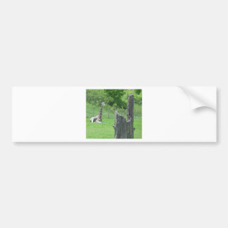 Giraffe hinter einem defekten Baum-Stumpf während Autoaufkleber