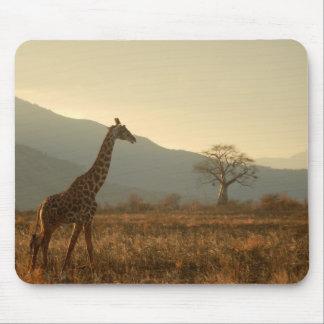 Giraffe in der Savanne Mousepads