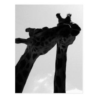 Giraffen-Liebe Postkarte