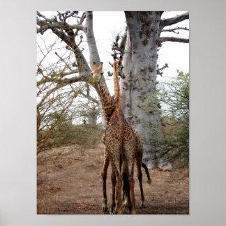 Giraffen-Zwillinge Afrika personifizieren der Poster