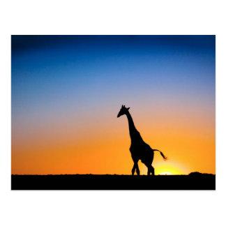 Giraffensonnenuntergang Postkarte