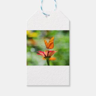 Glänzender Schmetterling auf Leuchtorange Gerber Geschenkanhänger
