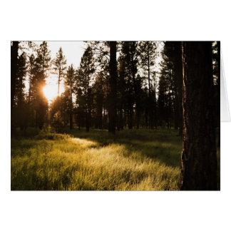 Glänzender Wald Karte