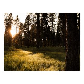 Glänzender Wald Postkarte