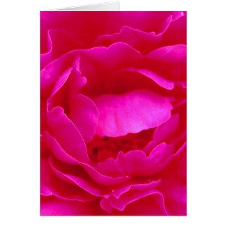 Glückliche der Vatertags-Rosa-Rose I