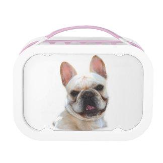 Glücklicher Hund der französischen Bulldogge Brotdose