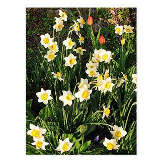 Glückliches Ostern/Frühling Postkarten