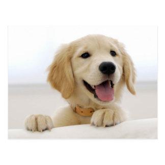 Golden retriever puppy postkarte