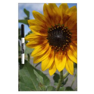 Goldene gelbe Sonnenblume, Trockenlöschtafel