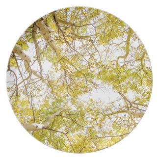 Goldener Aspen-Waldhimmel Teller