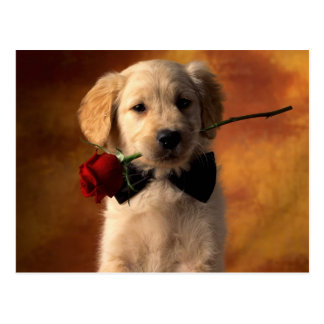 Goldener Retriever-Welpe holt eine Rose Postkarte