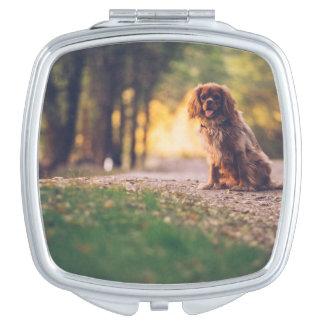 Goldener Spanielhund, der in der Sonne auf Weg Taschenspiegel