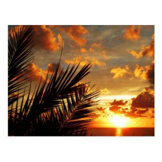 Goldenes Sonnenuntergang-Meer und Palmtree Postkarte