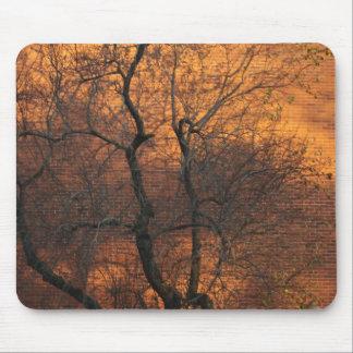 Goldrausch-Baum Mauspads