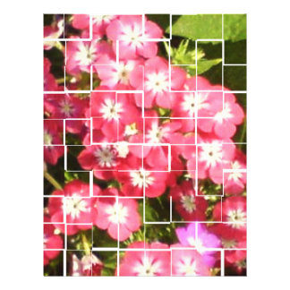 Grafik-Entwurfs-Fotografie-Künste-Geschenke 21,6 X 27,9 Cm Flyer