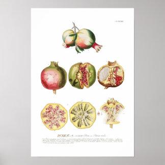 Granatapfel Poster