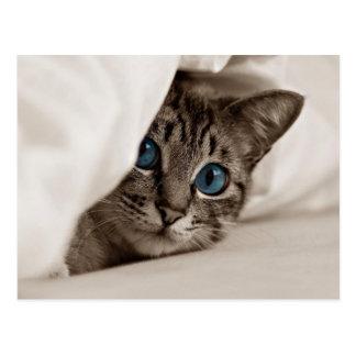 Graues Kätzchen, das in den weißen Blättern sich Postkarten