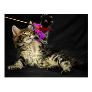 Graues Kätzchen, das mit Federn spielt Postkarten