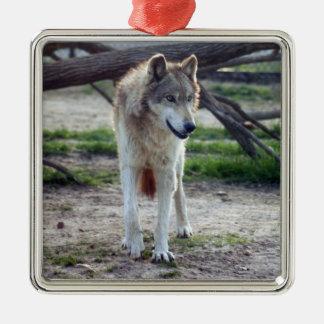 grey-wolf-13 quadratisches silberfarbenes ornament